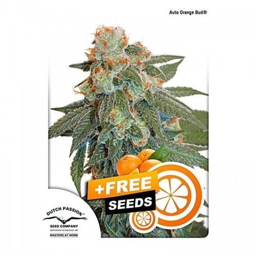Auto Orange Bud