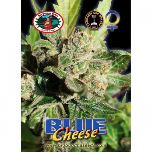 Blue Cheese