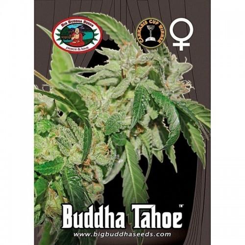 Buddha Tahoe OG
