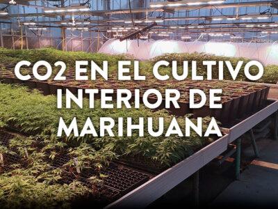 CO2 en el cultivo interior de marihuana