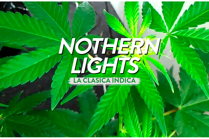 Northern Lights, un clásico de la índica